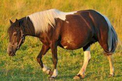 From Obama Horse Manure to Obama Horse Panic