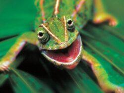 Iran the cunning chameleon according to Harold Rhode