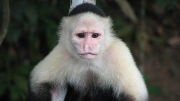 Putin Ethics No Different From Monkeys' Ethics in the Jungle