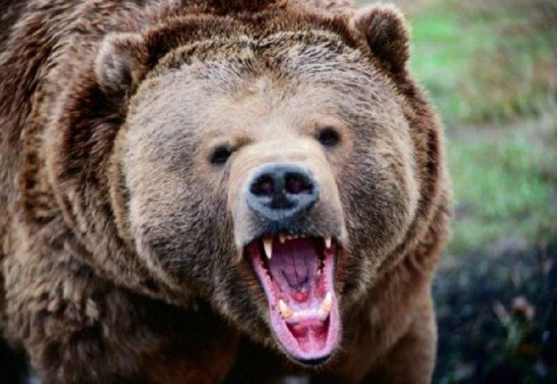 Putin Poked a Hibernating Grizzly