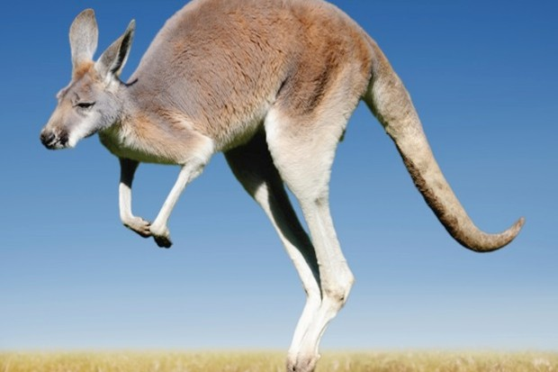 Saudi Arabia Kangaroo Court Exonerates the Guilty